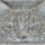 Hoe zien computers een kat